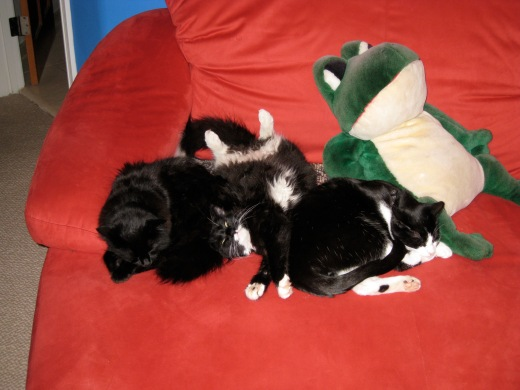 Zoe, Rico and Ozzy snuggled up together